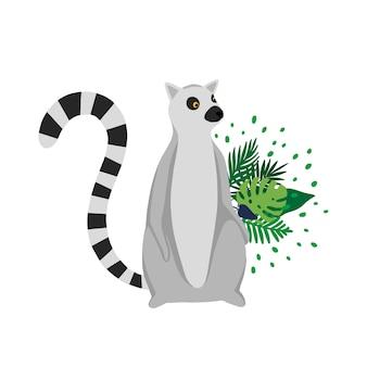 Lemur odizolowywający w białym tle