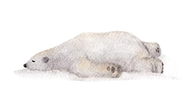 Leniwy niedźwiedź polarny śpi, akwarela ilustracja.