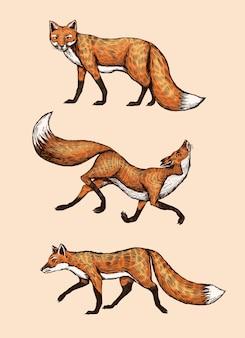 Leśne zwierzę imbir latające i skaczące