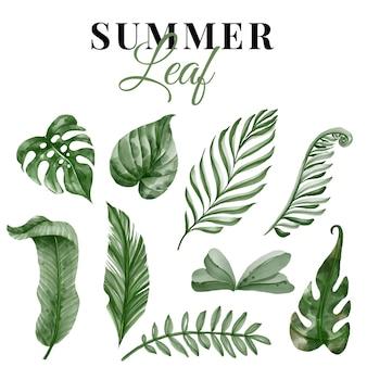 Letnia zieleń tropikalny liść na białym tle zestaw