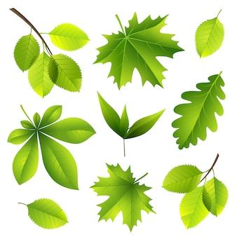Letnie liście