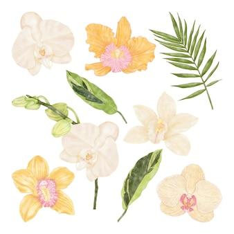 Letnie tropikalne egzotyczne żółte i białe kwiaty orchidei