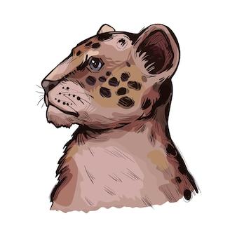 Lew tygrys hybrydowy potomstwo lwa i tygrysa, portret egzotycznego zwierzęcia na białym tle szkicu. ręcznie rysowane ilustracji.