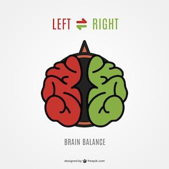 Lewa prawa półkula mózgu wektor