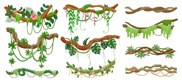 Liany dżungli. las deszczowy zielony winorośli wiszące na gałęzi. kreskówka tropikalne liście, liany, mech i kwiaty na drzewie. rośliny pnącze wektor zestaw. ilustracja tropikalna zielona gałąź, liść drzewa środowiska