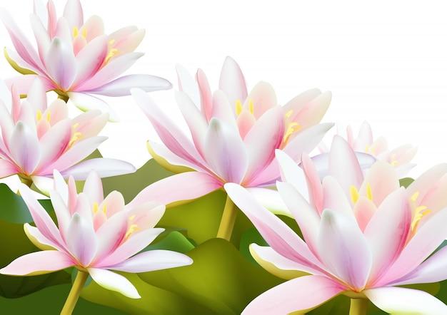 Lilia wodna kwiaty realistyczne tło