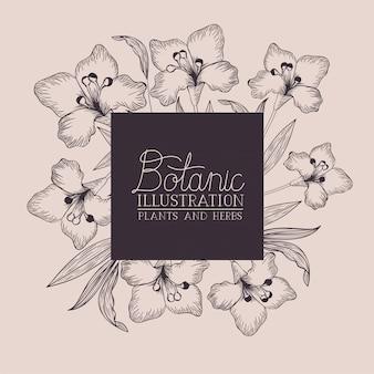 Lily kwiaty ozdobne kwadratowe ramki