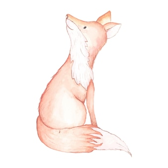 Lis na białym tle akwarela ilustracja