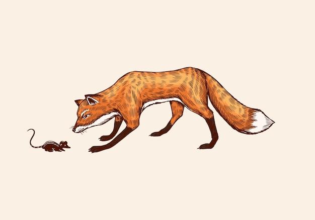 Lis podkrada się do ofiary