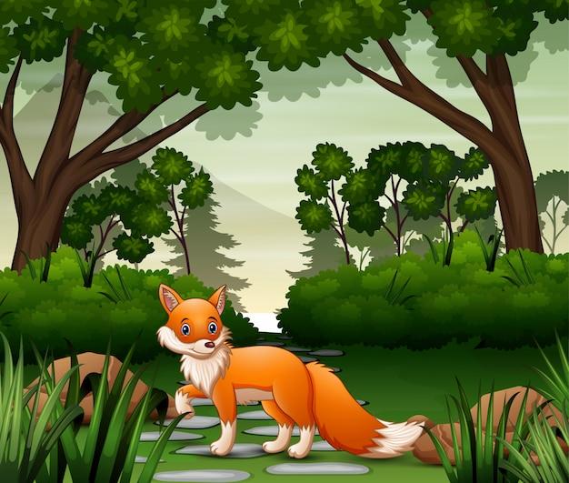 Lis szuka ofiary na leśnej scenie