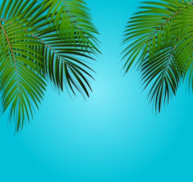 Liść palmowy tło wektor