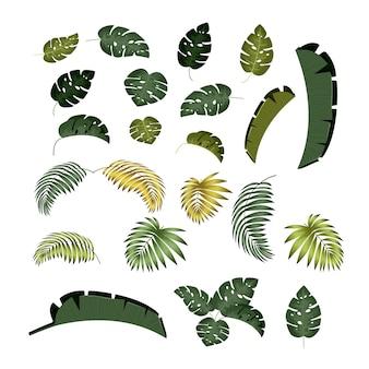 Liść palmy tropikalne liście z odosobnioną bielą