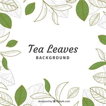 Liści herbaty tło w stylu wyciągnąć rękę