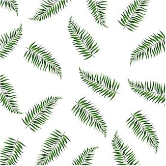 Liści palmowych białym tle