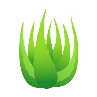 Liście aloe vera na białym tle, clipart liści roślin aloe vera, aloes dla składników kosmetyków produktów krem, ilustracja realistyczne clipart farmy plantacji aloe vera