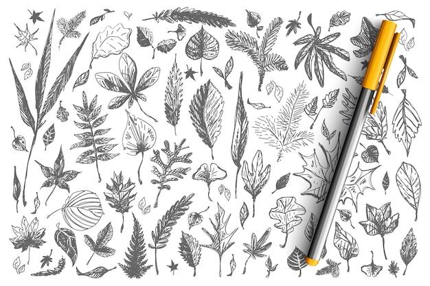 Liście doodle zestaw. kolekcja różnych kształtach dekoracyjnych jesienno-wiosennych spadających drzew brzoza dąb