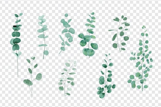 Liście eukaliptusa ustawione na białym tle