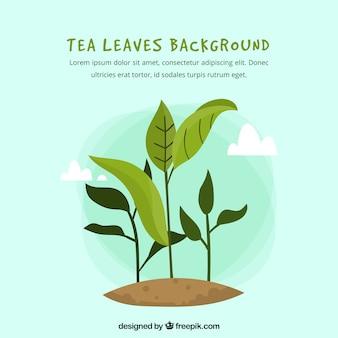 Liście herbaty tło z płaska konstrukcja