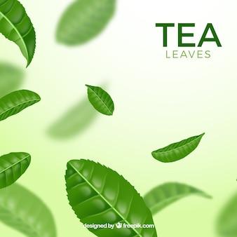 Liście herbaty tło z realistycznym stylu