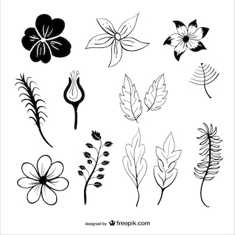 Liście i kwiaty sylwetki wektora