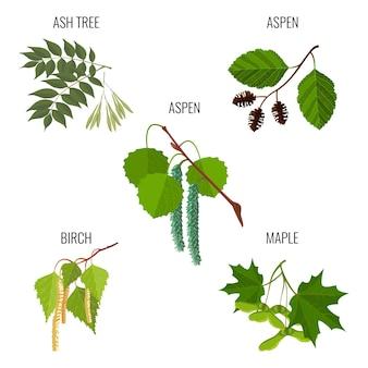 Liście jesionu, kwiaty męskie osiki, olcha zielona, pąki brzozy i klucze klonowe lub samara na białym tle. realistyczna ilustracja szczegółowa zieleni liści na wiosnę.