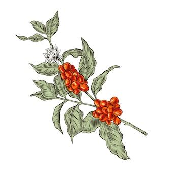 Liście kawy i jagody ilustracja