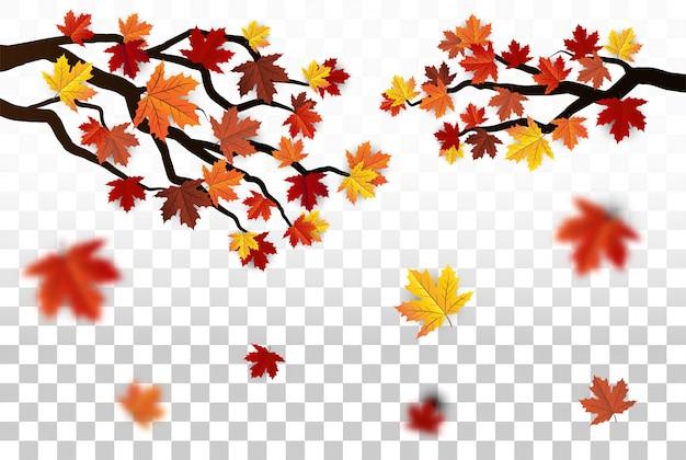Liście klonu na białym tle, przezroczyste, jesień