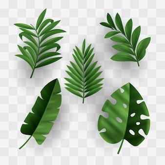 Liście kolekcja tropikalny design