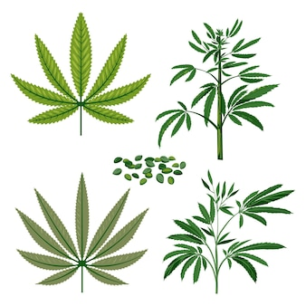 Liście konopi botanicznych