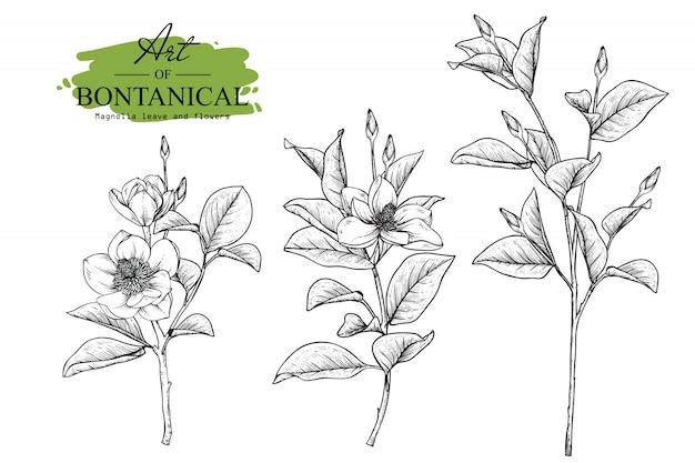 Liście magnolii i rysunki kwiatowe