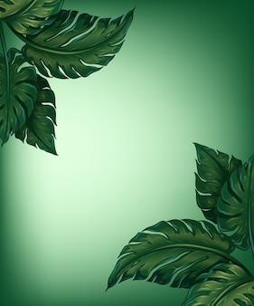 Liście zieleni