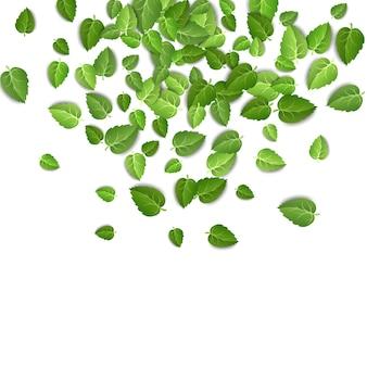 Liście zielonej herbaty spadające na pojedyncze białe tło