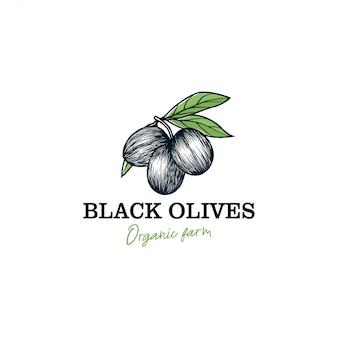 Logo oliwy z oliwek na etykiecie produktu - natura zioło żywności - świeże owoce oliwne z liściem