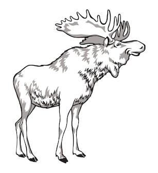 Łoś czarno-biały rysunek rogatego zwierzęcia, mieszkańca lasu.