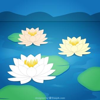 Lotus kwiaty w tle