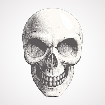 Ludzka czaszka na jasnym tle