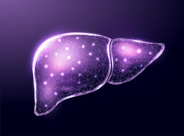 Ludzka fioletowa wątroba. model szkieletowy w stylu low poly. koncepcja lekarska, leczenie zapalenia wątroby. streszczenie nowoczesne 3d wektor ilustracja na ciemnym tle.