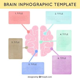Ludzki mózg infografika szablon w pastelowych kolorach