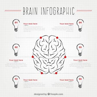 Ludzki mózg infografika sześć żarówek