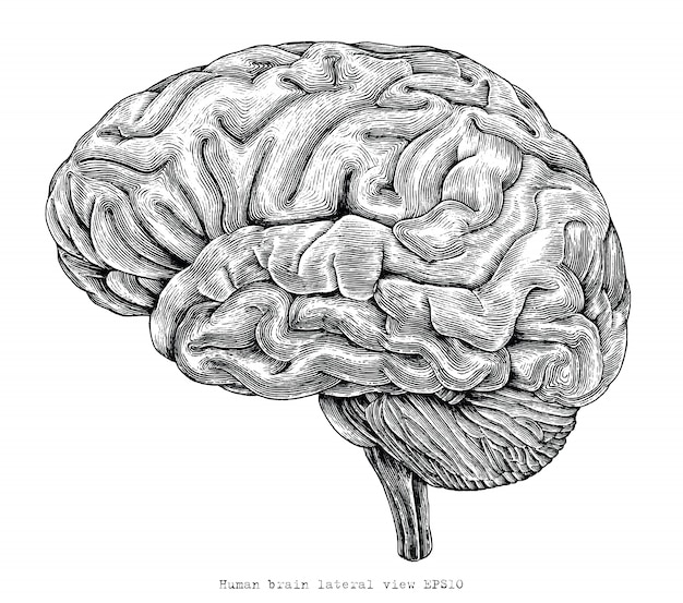 Ludzki mózg widok z boku ręcznie rysunek rocznika grawerowania ilustracji