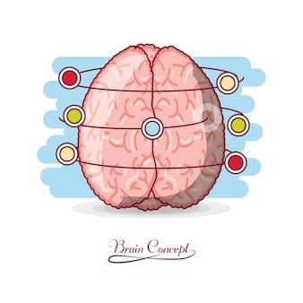 Ludzki mózg z kolorowymi kropkami