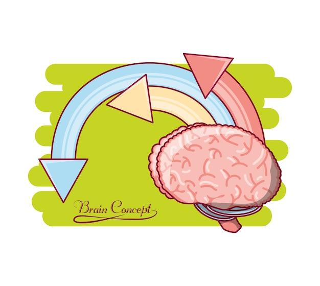 Ludzki mózg ze strzałkami