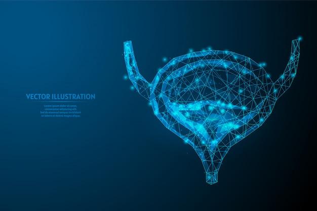 Ludzki pęcherz z bliska. anatomia narządów system wydalniczy. choroby nerek, rak, zapalenie pęcherza moczowego, kamienie. innowacyjna medycyna i technologia. 3d wireframe low poly ilustracja.