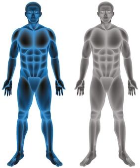Ludzkie ciało na białym tle