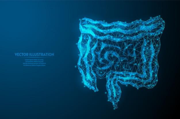 Ludzkie jelita z bliska. narządy wewnętrzne. anatomia narządu wewnętrznego. przewód pokarmowy i żołądkowy. innowacyjna medycyna i technologia. 3d wireframe low poly ilustracja.