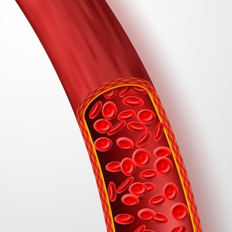 Ludzkie naczynie krwionośne z czerwonymi krwinkami.