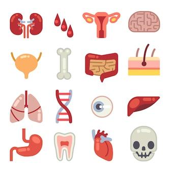 Ludzkie narządy wewnętrzne płaskie wektorowe ikony