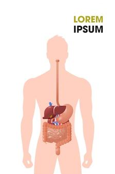 Ludzkie narządy wewnętrzne układ pokarmowy struktura układ pokarmowy plakat medyczny portret płaska pionowa kopia przestrzeń