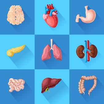 Ludzkie narządy wewnętrzne z mózgiem, sercem, żołądkiem, trzustką, jelitami, płucami, nerkami i wątrobą na białym tle