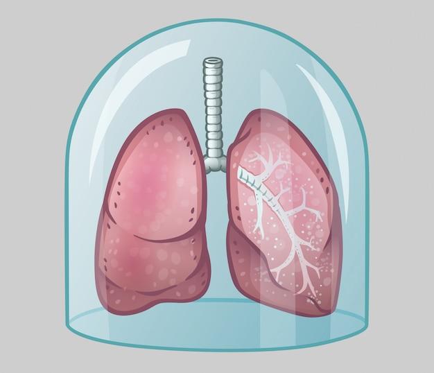 Ludzkie płuca pod szklaną kopułą
